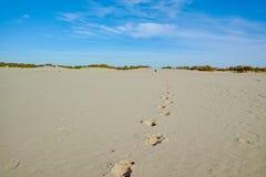 Um homem parte amarelar as dunas de areia, passos na areia no parque nacional Druinse Duinen em Brabante norte, Países Baixos fotos de stock royalty free