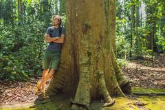 Um homem perto de uma árvore enorme As raizes de uma árvore velha, bali Destino do curso da ilha de Bali, cultura, objetos da art imagem de stock royalty free