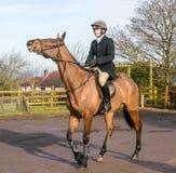 Um homem que monta um cavalo na caça inglesa foto de stock