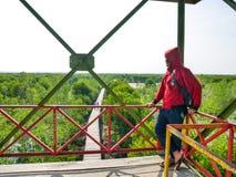 Um homem que olha manguezais Forest From Above na torre fotografia de stock