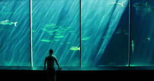 Um homem que olha um aquário video estoque