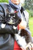 Um homem que realiza no grande gato das mãos ao andar no parque imagem de stock royalty free