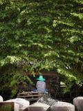 Um homem que senta-se sob a árvore Imagens de Stock Royalty Free
