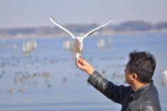 Um homem que tem o pássaro de alimentação do divertimento em uma praia Fotografia de Stock