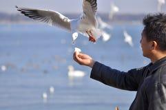 Um homem que tem o pássaro de alimentação do divertimento em uma praia Fotografia de Stock Royalty Free