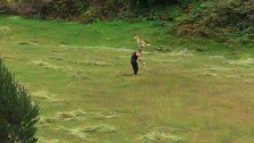 Um homem sega a grama no campo video estoque