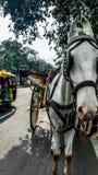 Um horsecar e um automóvel na estrada na Índia Imagens de Stock