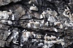 Um i Lofoten Imagem de Stock