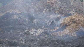 Um incêndio florestal queima flores pequenas do feno da grama seca, ao detrimento dos animais, da flora e da fauna video estoque