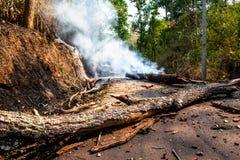 Um incêndio violento severo queimou as árvores na floresta até que desmoronaram e obstruíram a estrada secundária foto de stock