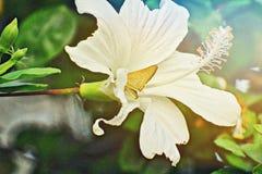 Um inseto é senta-se na flor ou suco da sugação da flor na manhã Imagem de Stock Royalty Free