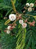 Um inseto na flor Foto de Stock Royalty Free