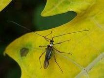 Um inseto na licença da morte Imagem de Stock