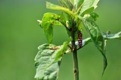 Um inseto vermelho Foto de Stock Royalty Free
