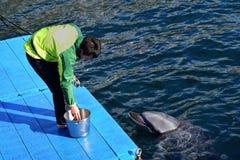Um instrutor japonês do golfinho está alimentando o golfinho em Japão Kagoshima imagens de stock