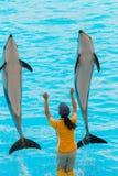 Um instrutor não identificado da mulher está mostrando golfinhos Foto de Stock