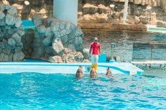 Um instrutor não identificado do homem está mostrando golfinhos enquanto executam Fotografia de Stock