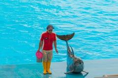 Um instrutor não identificado do homem está mostrando golfinhos enquanto executam Fotos de Stock Royalty Free