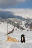 Um inverno ajardina Fotos de Stock Royalty Free