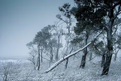 Um inverno na floresta Fotos de Stock Royalty Free
