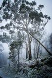 Um inverno na floresta Imagem de Stock Royalty Free