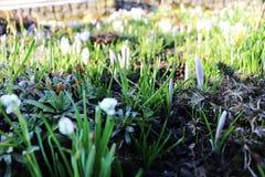 Um jardim bonito da mola com muitas flores da mola Foto de Stock Royalty Free
