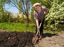 Um jardim de escavação da mulher mais idosa Fotografia de Stock