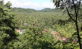 Um jardim largo do coco em uma vila Fotos de Stock