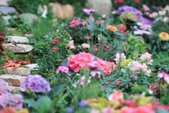 um jardim pequeno na mostra de flor 2018 da HK fotos de stock royalty free