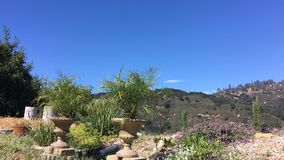 Um jardim pequeno nas montanhas de Califórnia as plantas contorcem-se no vento video estoque