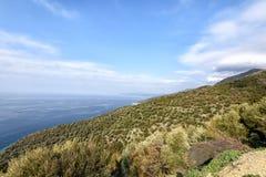 Um jardim verde-oliva nas montanhas imagens de stock