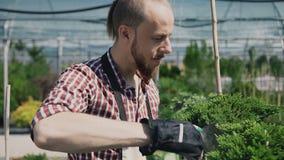 Um jardineiro com uma ferramenta de jardim especial pulverizou plantas coníferas em uma grande estufa filme