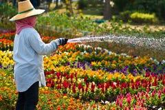 Um jardineiro molha as flores. imagem de stock royalty free