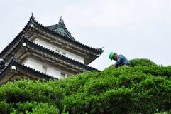 Um jardineiro no trabalho no palácio imperial do Tóquio Fotos de Stock Royalty Free