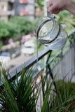Um jato da água de um jarro para molhar plantas decorativas imagens de stock