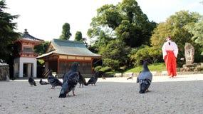 Um jogo dos pombos ou das pombas? suspensão em torno do santuário japonês E imagens de stock