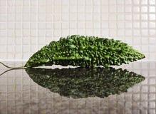 Um karela, o pepino amargo Imagens de Stock Royalty Free
