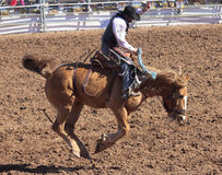 Um La Festa De Los Vaqueros, Tucson, o Arizona Imagem de Stock