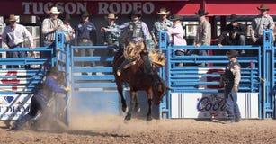 Um La Festa De Los Vaqueros, Tucson, o Arizona Fotografia de Stock