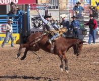 Um La Festa De Los Vaqueros, Tucson, o Arizona Foto de Stock