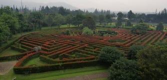 Um labirinto das árvores fotografia de stock royalty free