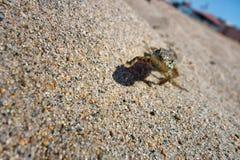 Um lagarto pequeno com uma atitude que bloqueia na areia que dirige sua maneira imagens de stock