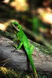 Um lagarto verde Imagens de Stock