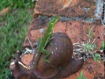 Um lagarto verde bonito nas Caraíbas vídeos de arquivo