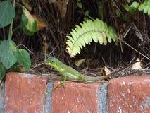 Um lagarto verde nos trópicos filme