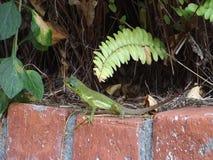 Um lagarto verde nos trópicos video estoque