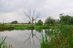 Um lago Foto de Stock