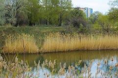 Um lago calmo do outono reflete a paisagem bonita fotografia de stock royalty free