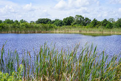 Um lago calmo perto da entrada do jardim zoológico de Brevard Foto de Stock Royalty Free
