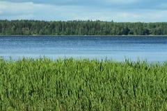 Um lago com floresta e grama Foto de Stock Royalty Free